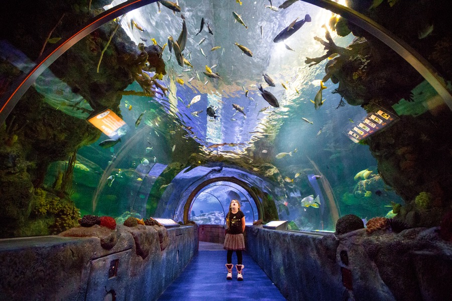 10 things to do in the mall of america with