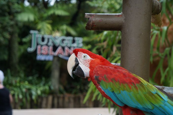 jungle animal fight