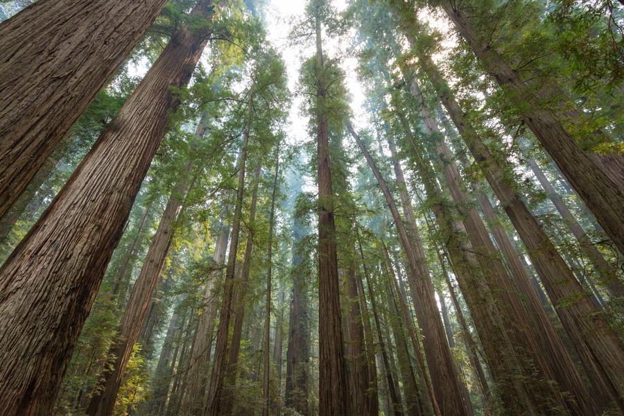 Photography Tour Around The Redwoods Amp Oregon Coast