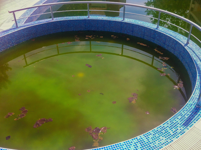 Apartment Disaster At Sunny Beach Slimy Green Swimming Pool Was Just The Beginning