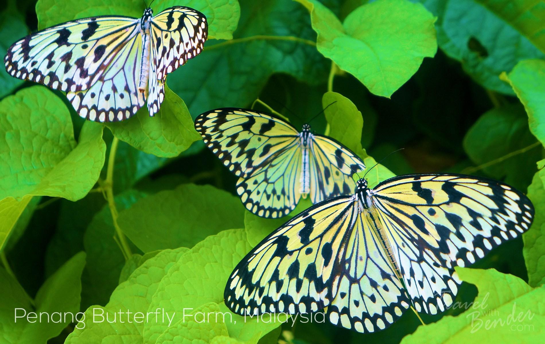 Spice Farm Penang Penang Butterfly Farm