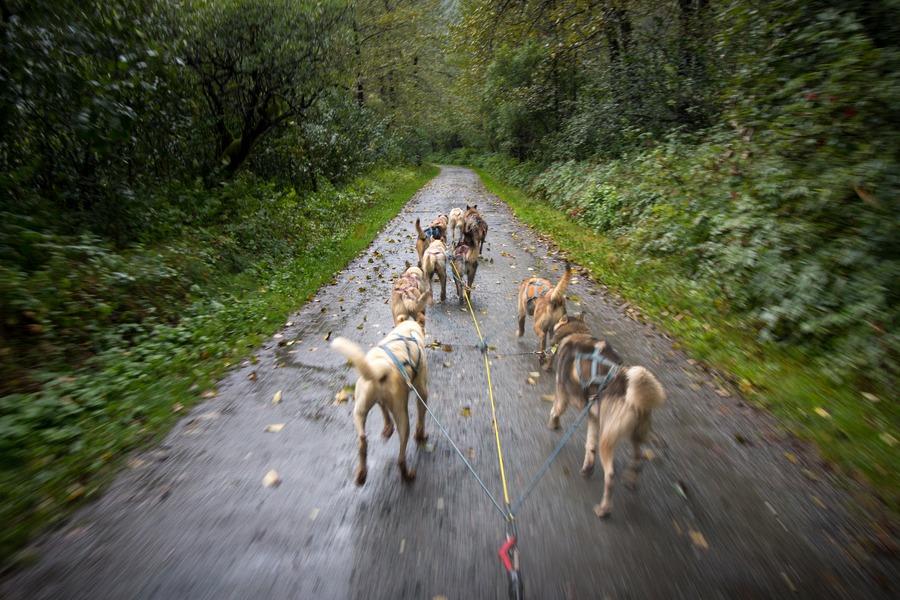 5 Ways For Kids To See Wildlife In Juneau Alaska