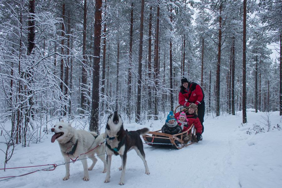 Husky Sledding In Lapland  My Favourite Safari In Rovaniemi fd3e6a6aa