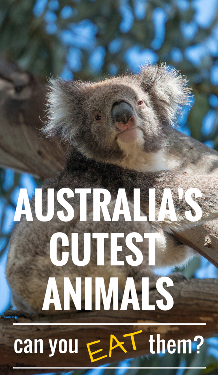 Can You Read Your Own Tarot Cards: 9 Cutest Australian Animals: Can You Eat Them?