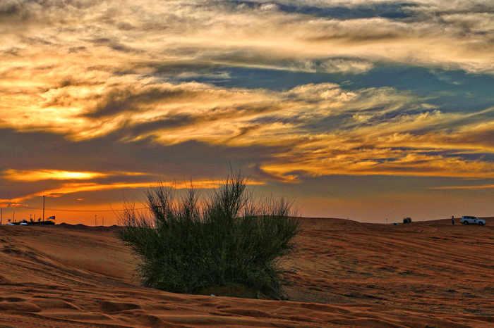 dubai_desert_safari_tour_IMG_1820_edited.jpeg