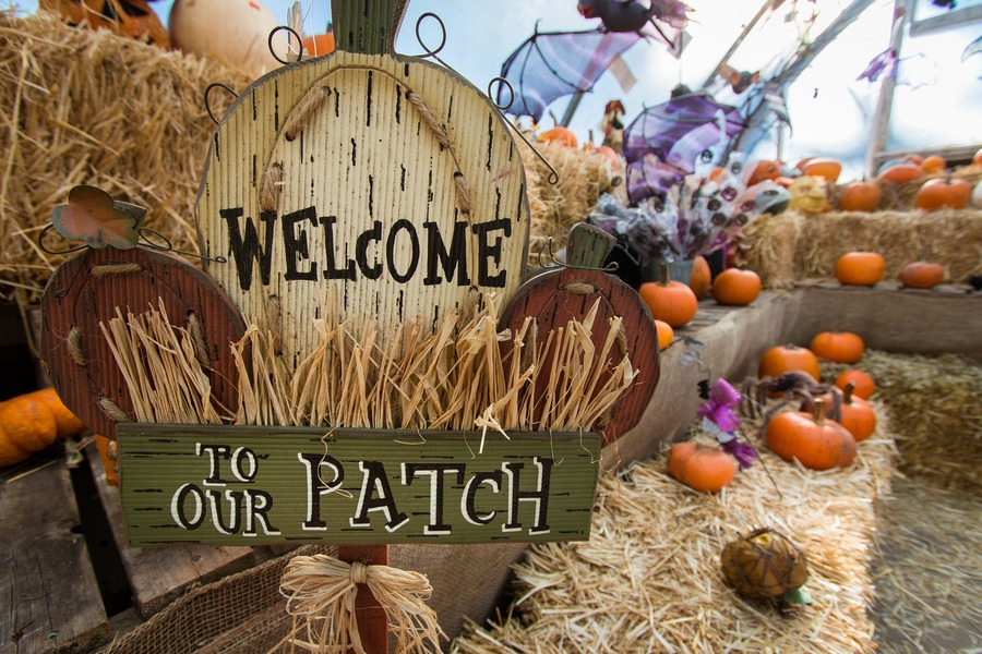 admission to the farm includes a full day of family fun with over 50 activities plus halloween themed attractions during october - Farm Halloween