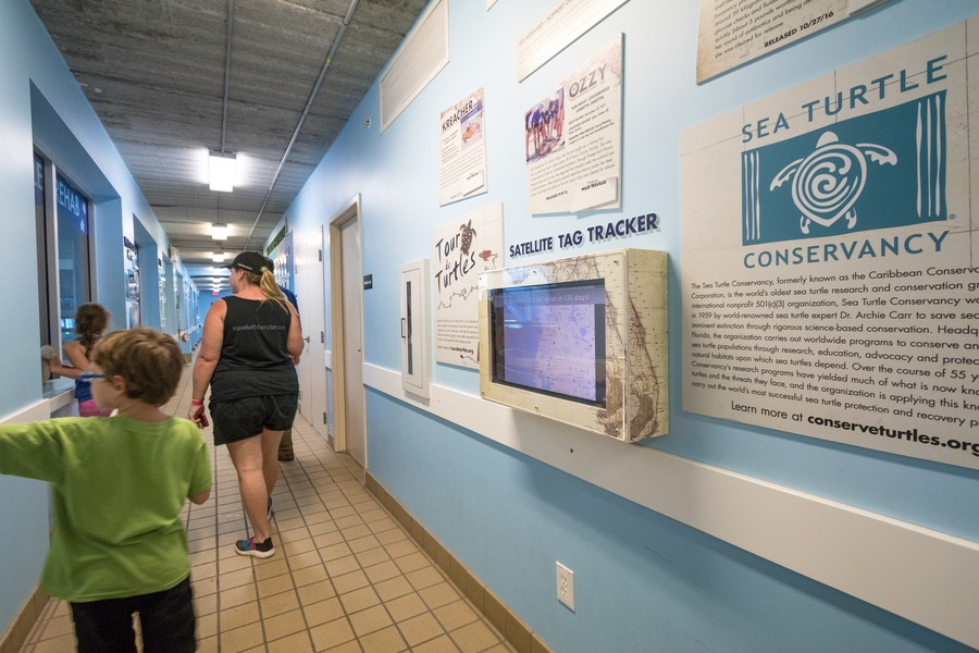 Clearwater Marine Aquarium Changed The Way I See Dolphins