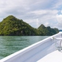 Mangrove Tour, Langkawi: Surprise Stingray Attack