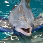 Clearwater Marine Aquarium Changed The Way I See Dolphins Forever