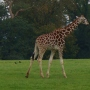 FOTA Wildlife Park: Ireland's Hidden Gem