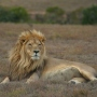 Top 5 Safari Destinations