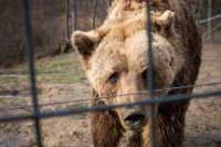 Libearty Bear Sanctuary: Face To Face With The Rescued Bears Of Romania