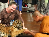 Close Encounter at Thailand's Tiger Temple