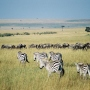 A Walk On The Wild Side: Great Safari Trips That You Will Remember For The Rest Of Your Life