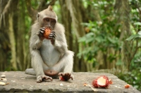Ubud: From Monkeys To Masterpieces