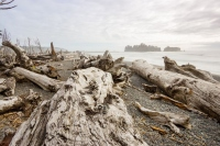 World's Freakiest Beach + 5 More Reasons To Visit Olympic National Park, Washington
