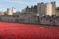 The Tower Of London Poppies: History In The Making
